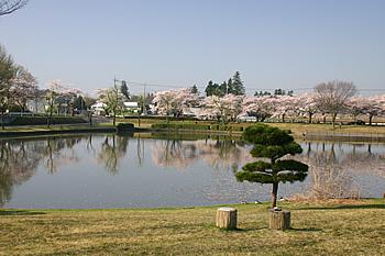 画像:柏原池公園風景02