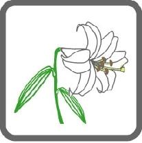 画像:市の花