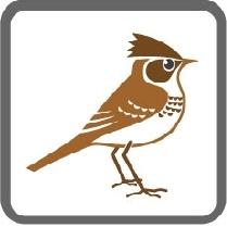 画像:市の鳥