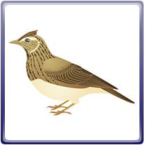 画像:石岡市の鳥-ひばり