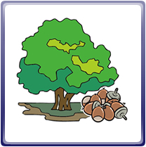画像:石岡市の木-しい