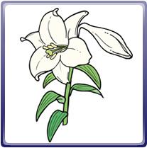 画像:石岡市の花-ゆり