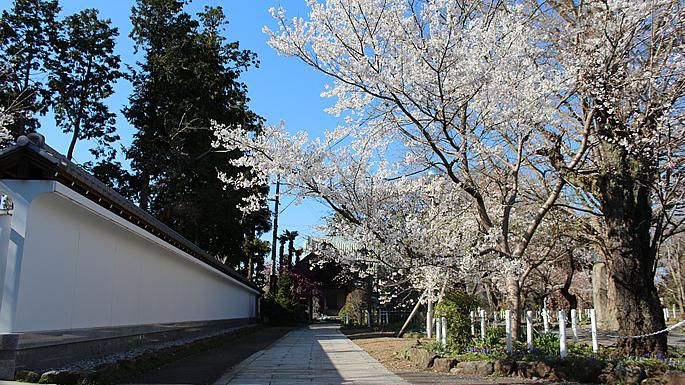 お花見スポットガイド201403