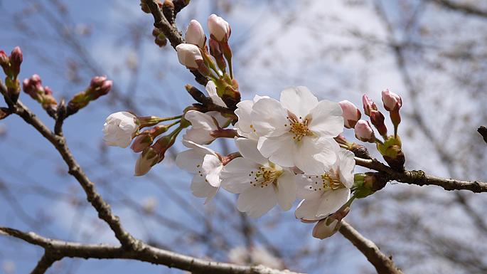 お花見スポットガイド201404
