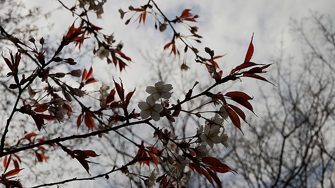 お花見スポットガイド201405