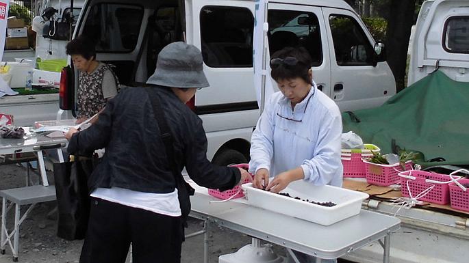 軽トラ朝市~新鮮な野菜を販売します~(毎週土曜日開催)04