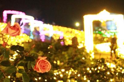 『12月1日 フラワーパークでイルミネーションが始まりました』の画像