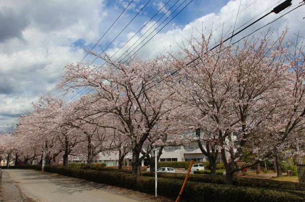 『豊後荘病院_ソメイヨシノ_0412』の画像