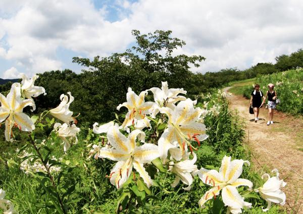 『やまゆり写真(H26いしおかフォトコンテスト入選 盛夏の山頂)』の画像