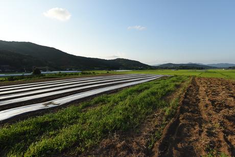 朝日里山ファームからの風景