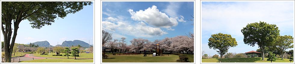 『柏原池公園』の画像