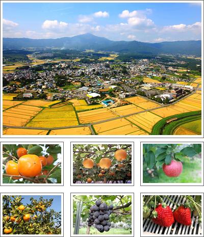 『有機農業と果樹栽培』の画像