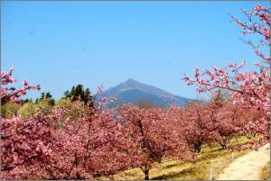 『桜記者会見1』の画像