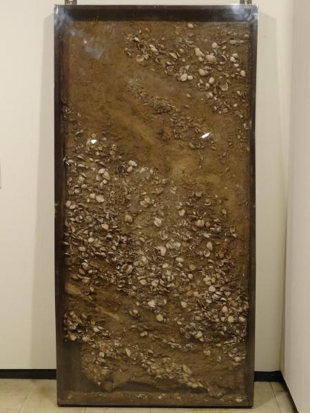 『東田中貝層剥ぎ取り』の画像