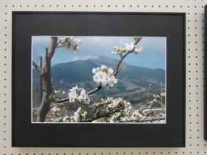 『写真 春 奨励賞』の画像