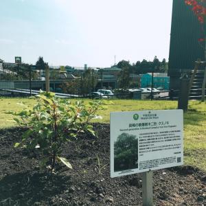 『平和の樹記念植樹』の画像